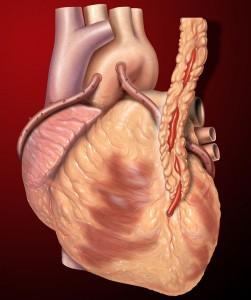 heart-251x300