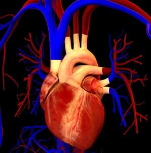 heart3-298x300